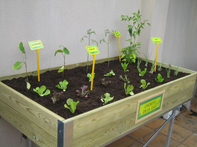 Semillas de papaya germinando miproyectoorganico - Huerto de urbano ...